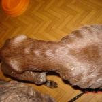 приюти за кучета Бургас