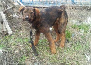 кучета приюти Бургас