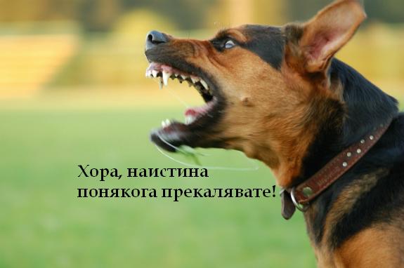 насилствено обучение-кучета-електрически нашийник