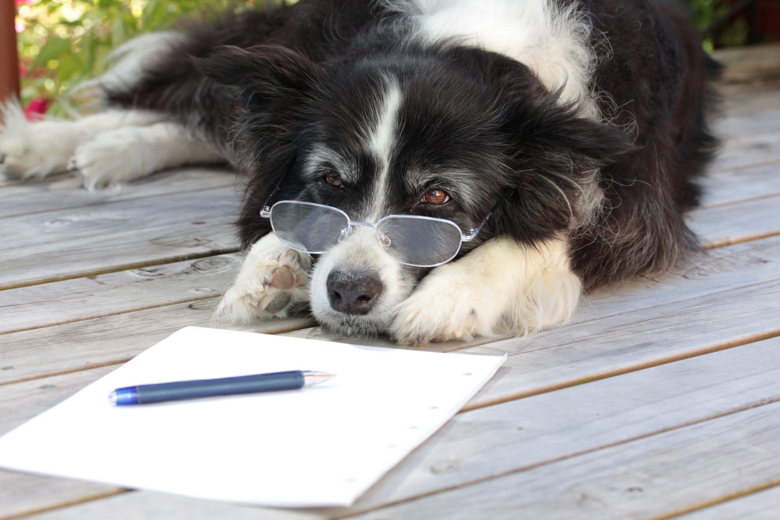 Артрит при кучета | Компетентно за здравето на Крем Move&Flex в България